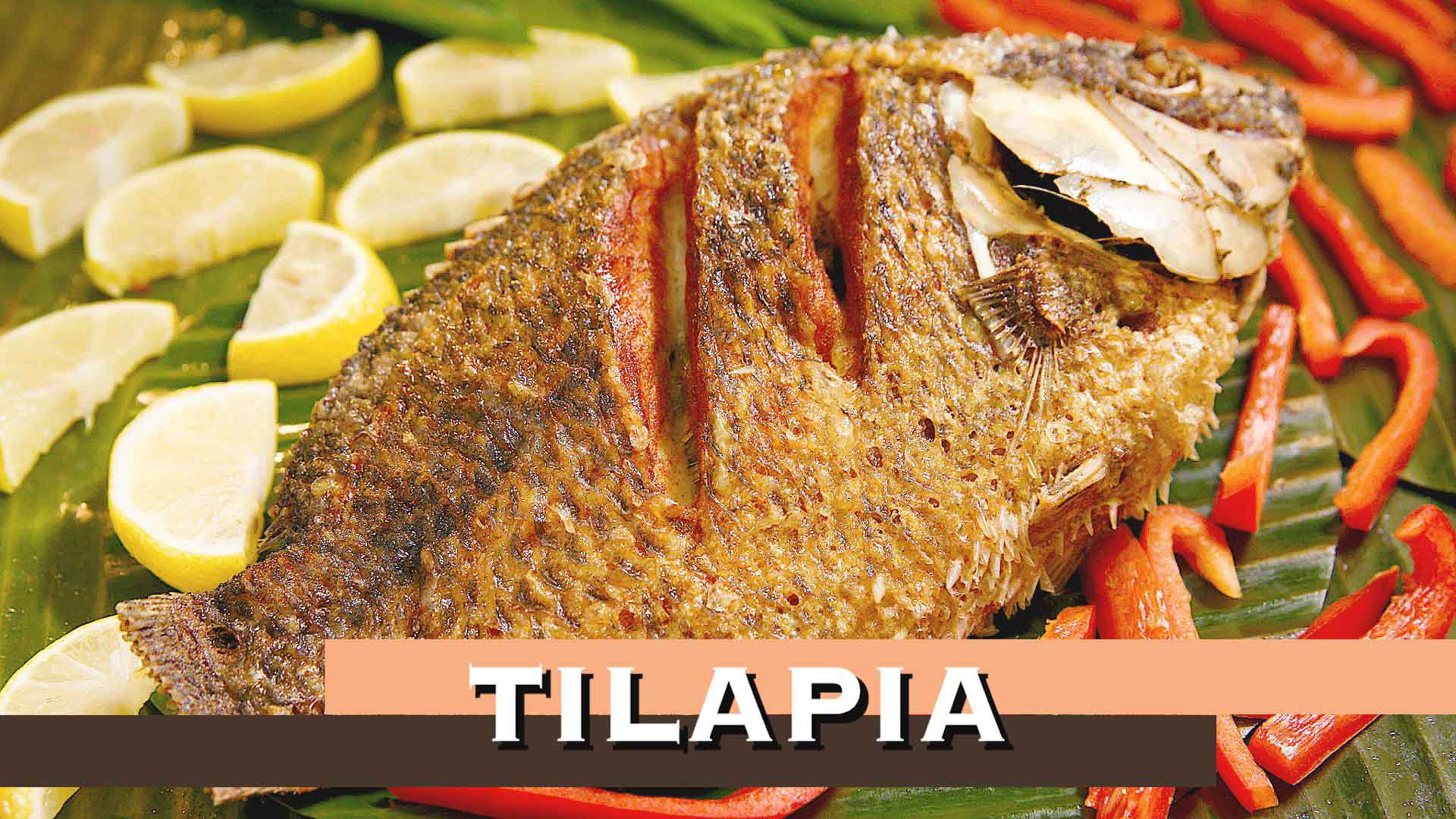 house-of-grill-tilapia